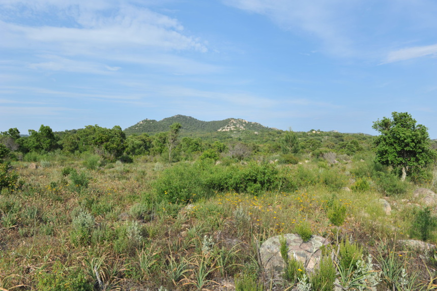 Terrain à bâtir Route de St Cyprien,secteur Pont de l'Oso (Lecci).